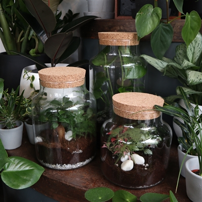 Terrarium - Cylinder (3 Sizes)