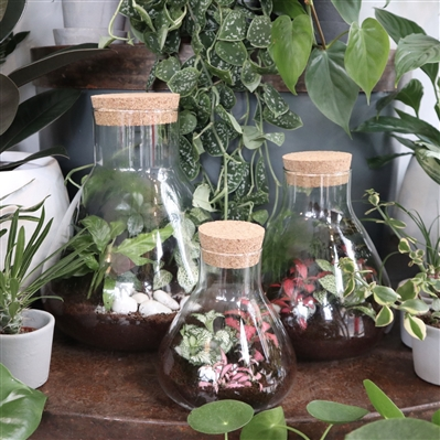 Terrarium - Flask (3 Sizes)