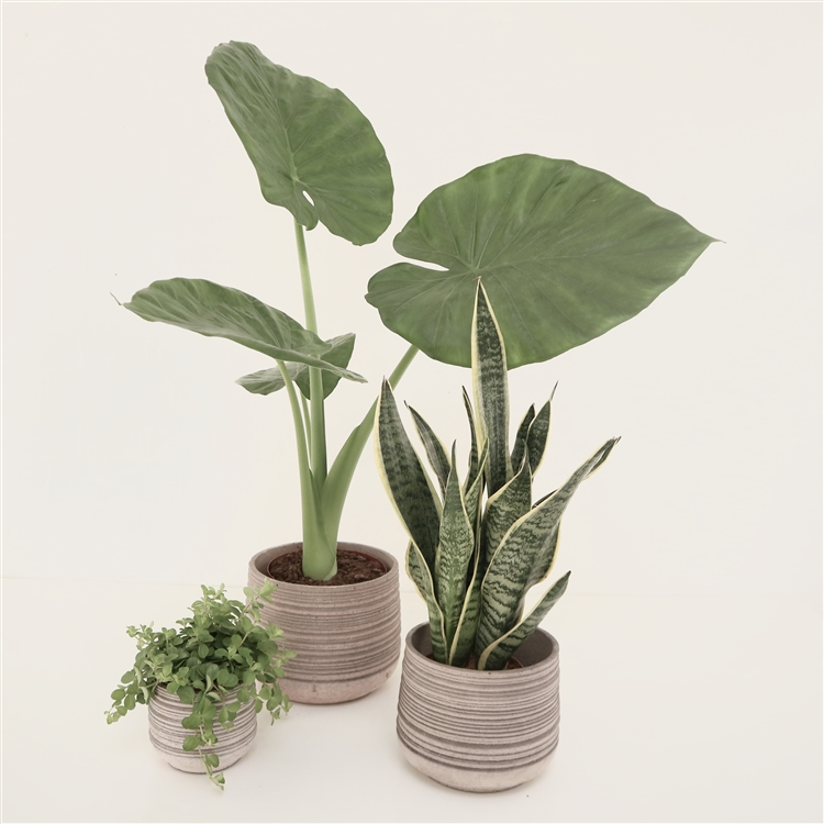 Earthenware Planter (3 Sizes)
