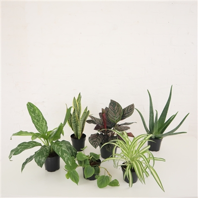 LOW MAINTENANCE PLANT SET