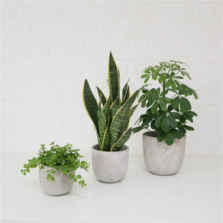 Textured Concrete Pot (4 Sizes)